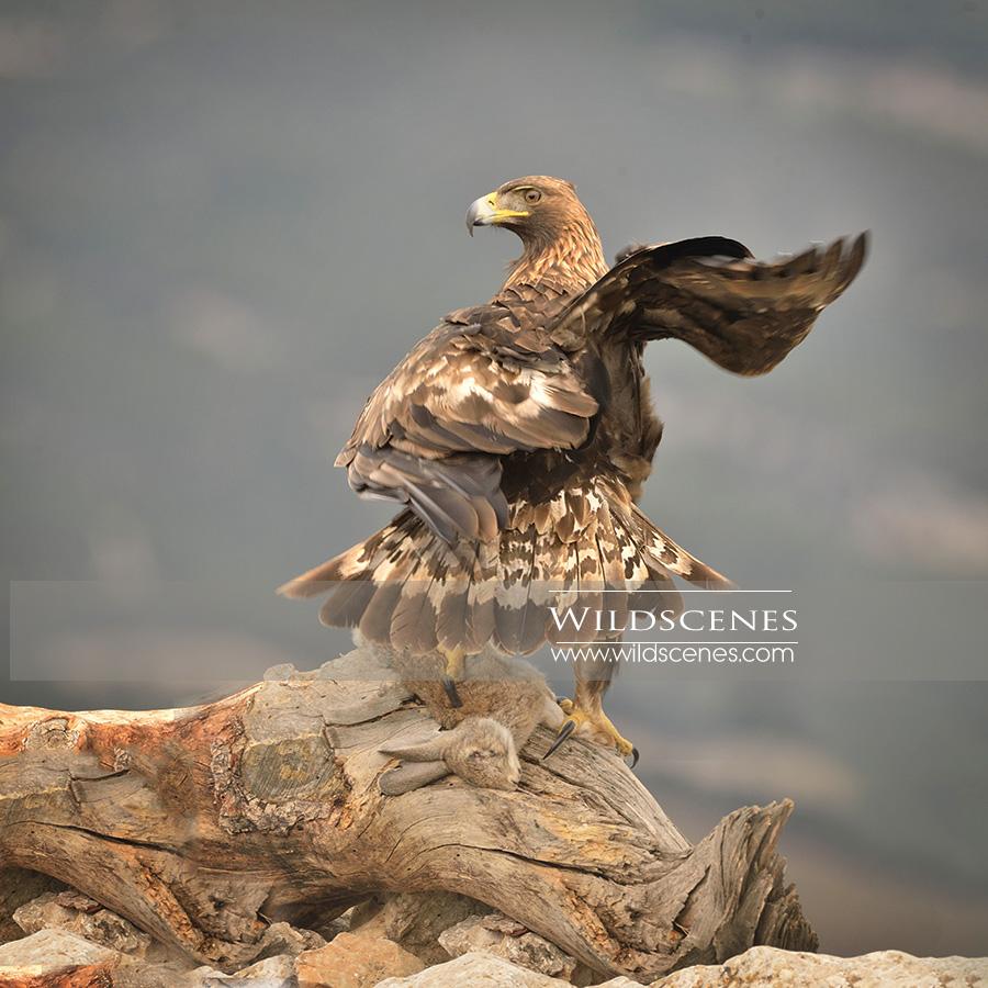 Yorkshire wildlife photographer