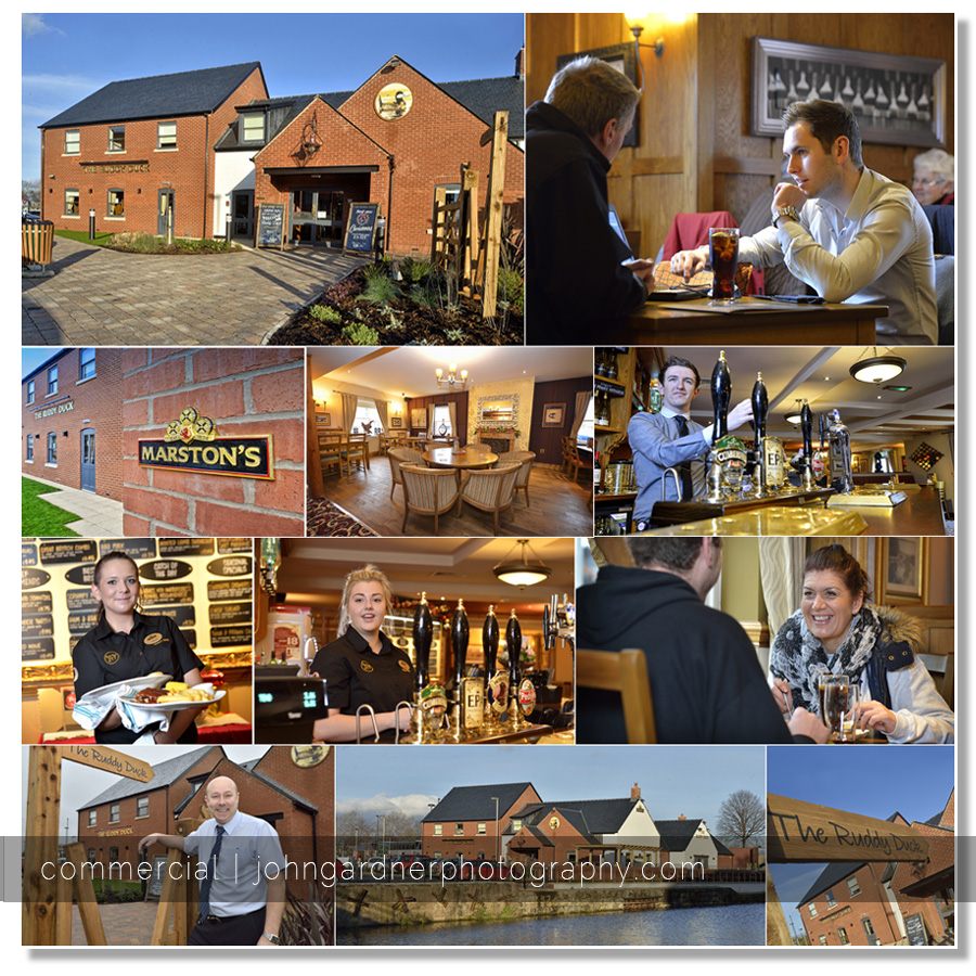 The ruddy duck, Wakefield. Commercial photographer Wakefield